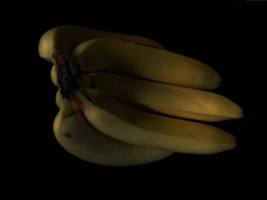 Courchesne, Luc. 1974. «Bananas Ripen In The Dark»